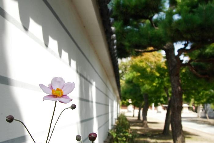 Myoukenji0610051