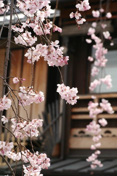 Sakura06052513