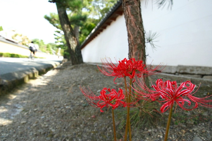 Soukokuji0609301