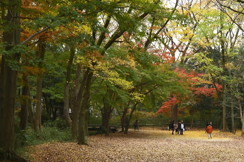 Tadasunomori0612033