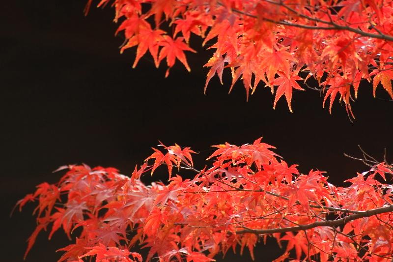 Toufukuji0612078